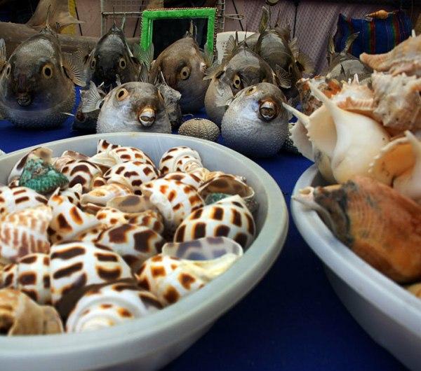 سوغات بوشهر ، گردشگری در بوشهر