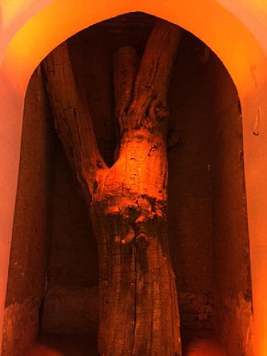 درخت بازمانده از گذشته که در زمان مرمت در داخل عمارت، حفظ شد