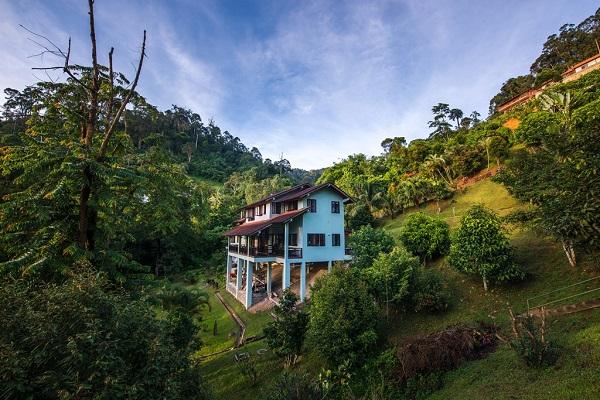 اقامتگاهی فوق العاده در جنگل های مالزی