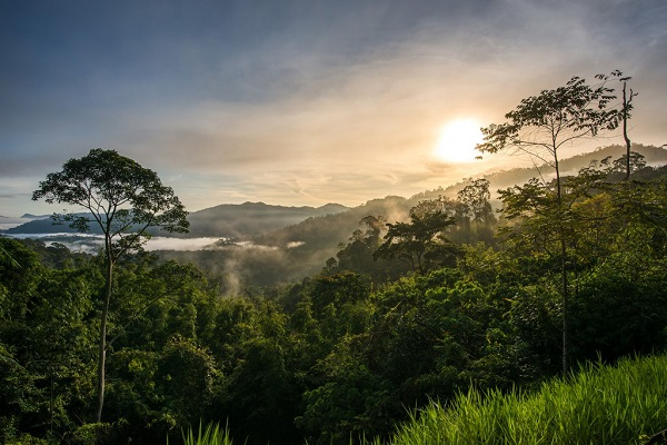 اقامت گاه جنگلی در کوالالامپور