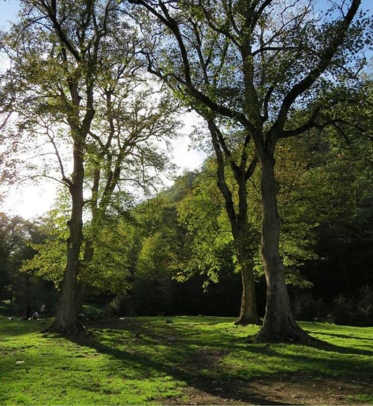 جنگل زیبای توسکستان در گرگان