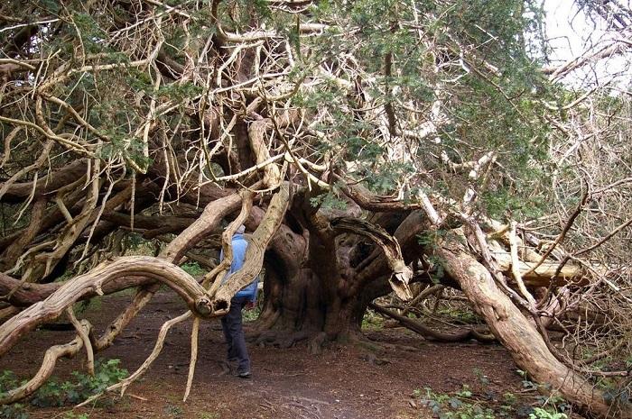کینگلی وله ، جنگلی شگفت انگیز و مرموز